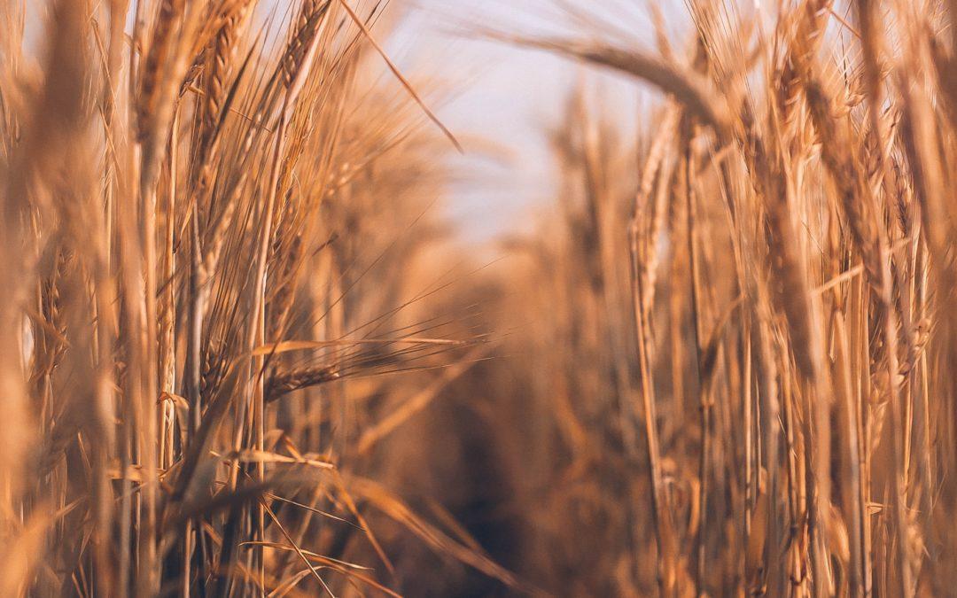 Créer des synergies entre les entreprises agroalimentaires en province du Luxembourg